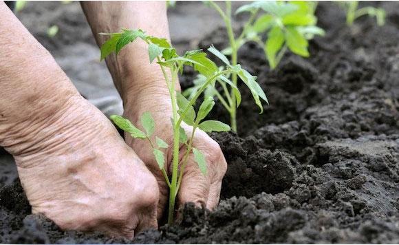 politiko---farming